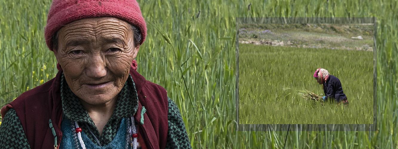 vrouw in veld Phugtal DSCF0271