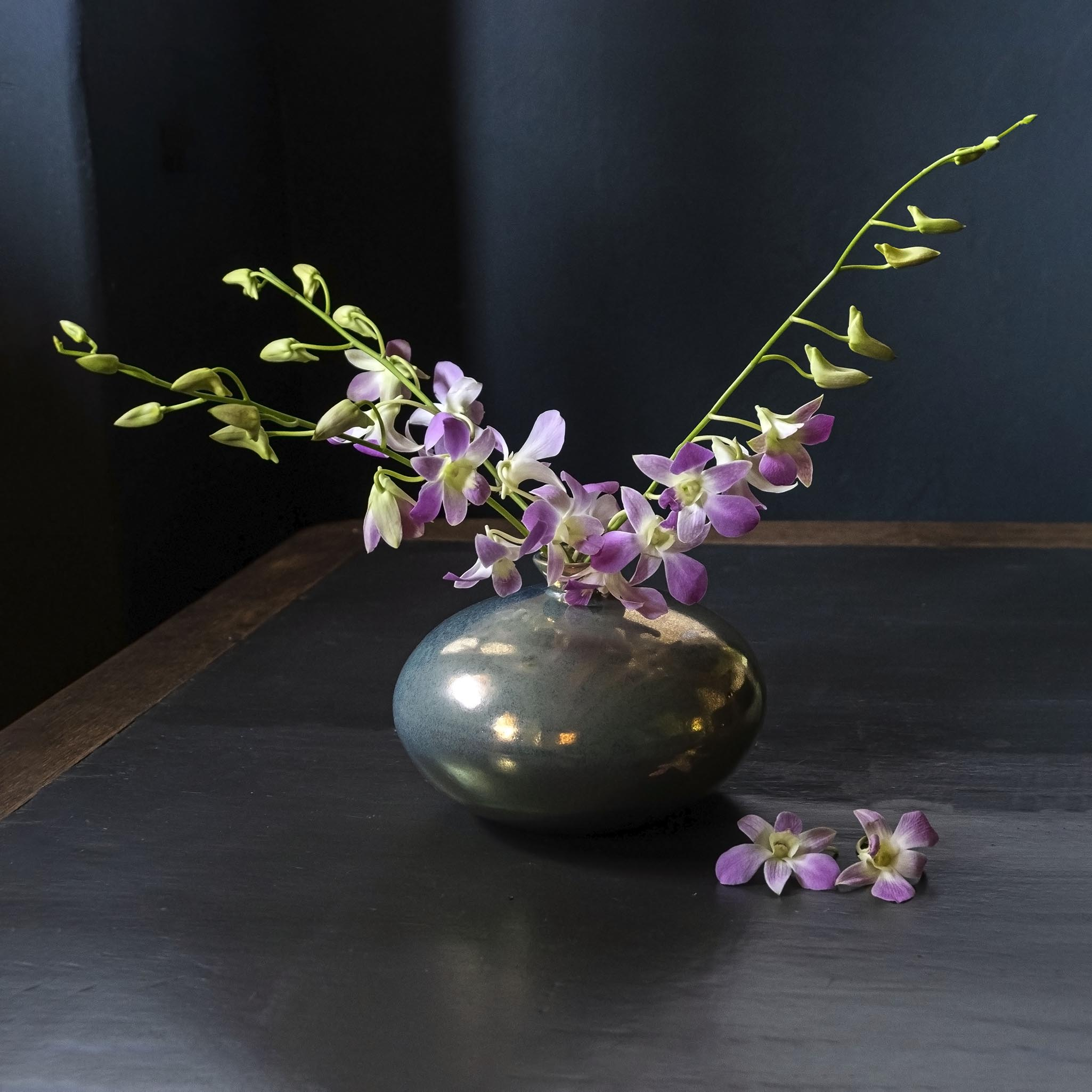 Orchideen 3.2.8 DSCF5402